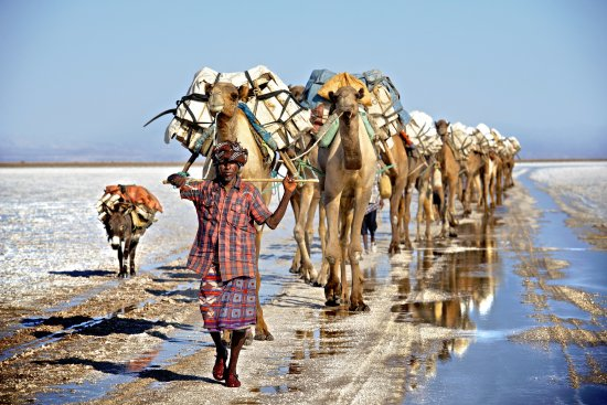 Mek'ele, Ethiopia: A camel train is leaving the Danakil. So beautiful!