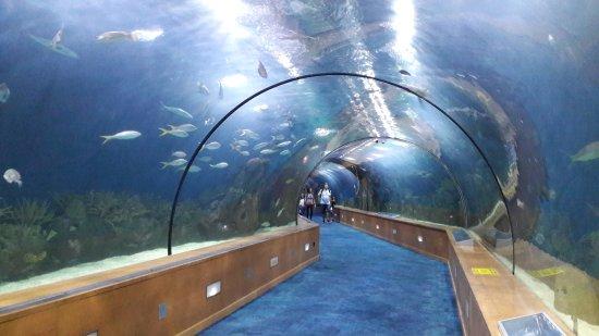 Oceanografic valencia picture of oceanografic valencia Entradas aquarium valencia