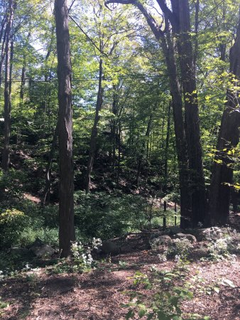 Stony Point, Estado de Nueva York: Bear mountain... there's a small zoo don't miss it! It is free but you can donate. The park was