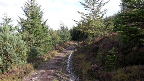 Newtonmore, UK: the trail