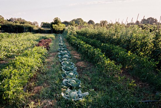 Palo Laziale, Italy: Vegetable garden