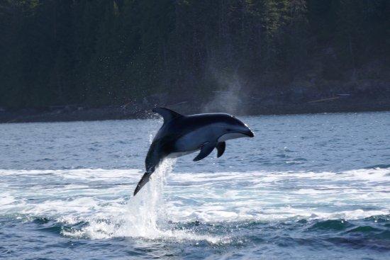 Heriot Bay, Canada: wildlife greeting us