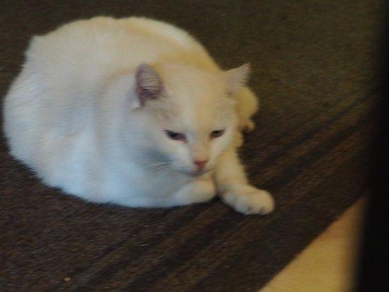 Hotel Stella Del Sud: The friendly white cat