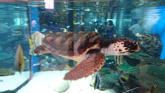 Otawara, Japan: ウミガメが至近で見れます!