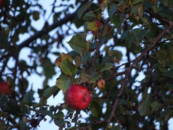 Ligatne, Letonia: You can pick apples along the road..!!
