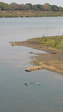 Саби, Южная Африка: Krokodil am Ufer des Sabie River