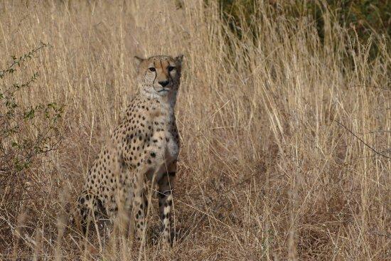 Madikwe Game Reserve, South Africa: photo9.jpg