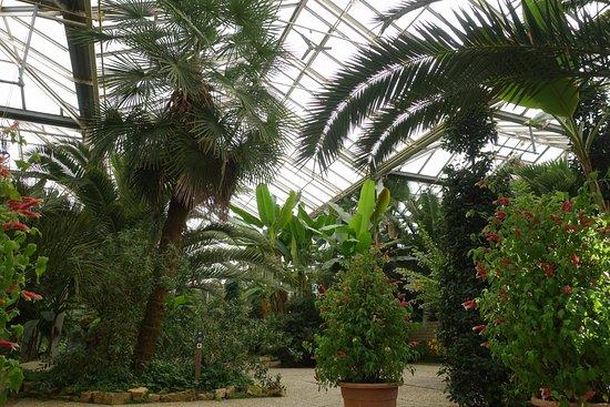 Arcen, Países Bajos: Dschungel im Gewächshaus