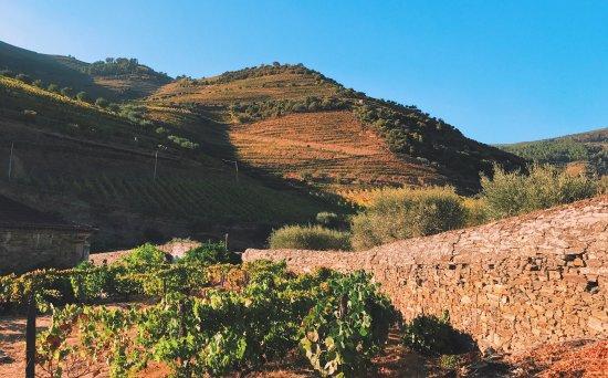 Jorge Barefoot - Wine & Tours: photo1.jpg