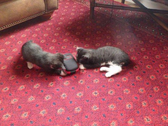 Hermanville, Canada: Resident kittens