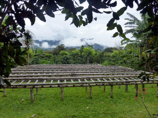 Boquete Coffee Tour: air drying racks