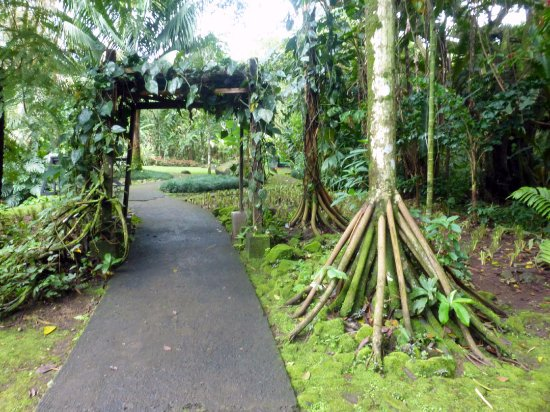 Sarchi, คอสตาริกา: path in the garden