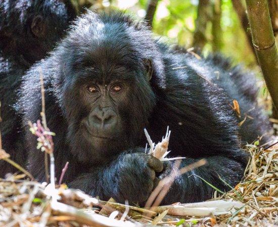EcoTours Rwanda