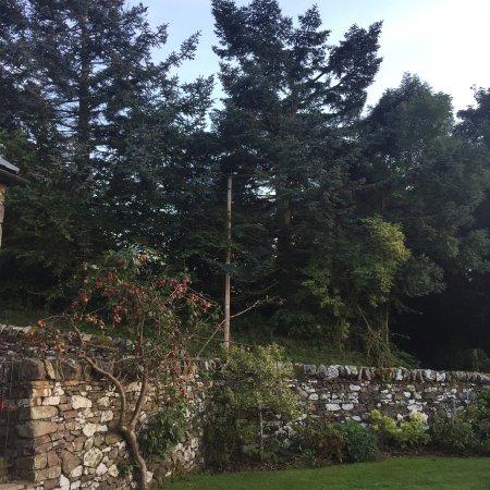 Yetholm, UK: plum tree in the garden