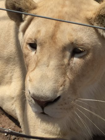 Wetevrede Lion Farm: photo4.jpg