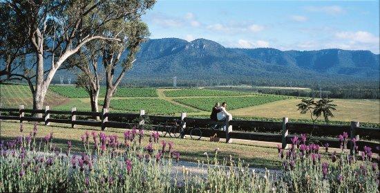 View in the front of Berenbell Vineyard Retreat showcasing the Brokenback Ranges