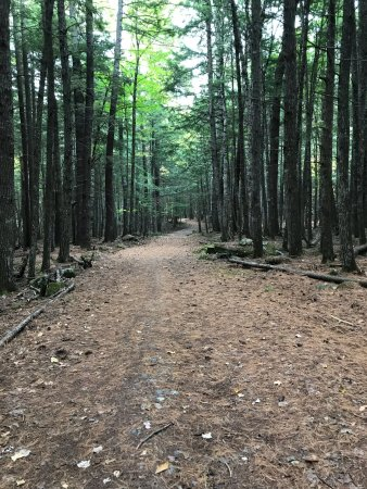 Milford, ME: The beginning of Carter Meadow Road Trail is smooth and wide.