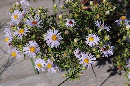Port Hood, แคนาดา: Beautiful flowers