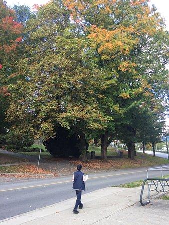 Burnaby, Kanada: photo2.jpg