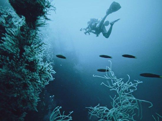 Thresher Shark Divers: photo2.jpg