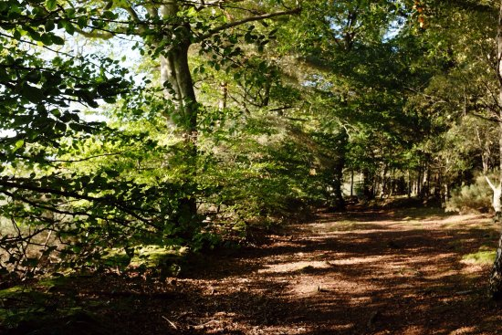 Denlethen Wood