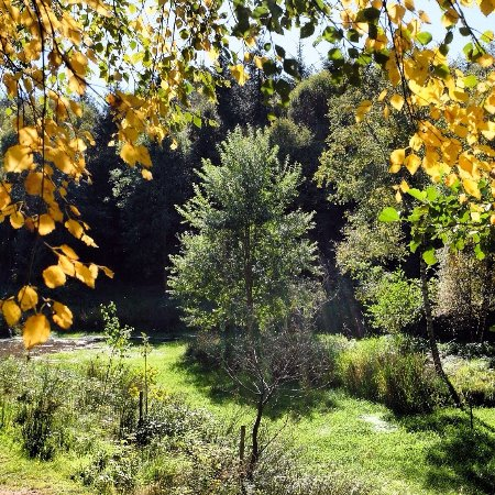 Laurencekirk, UK: Denlethen Wood