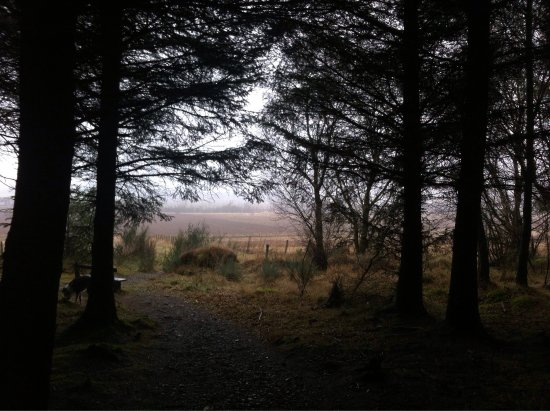 Laurencekirk, UK : Denlethen Wood