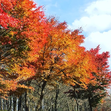 Jurigi Highlands: photo0.jpg