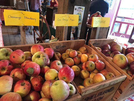 Shelburne Farm: Great smaller farm. Amazing, hard to find heirloom apples, baked goods, farm store, pick your ow