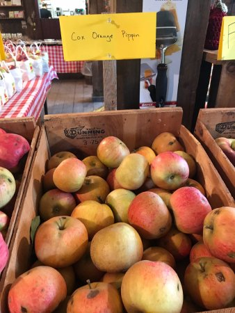 Stow, MA: Great smaller farm. Amazing, hard to find heirloom apples, baked goods, farm store, pick your ow