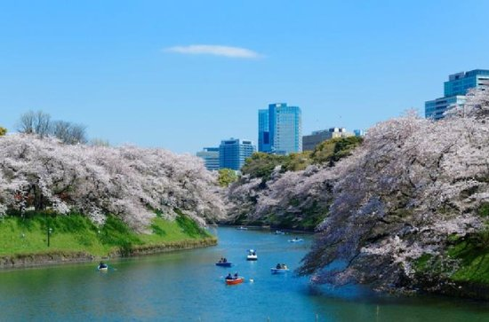 Visit Popular Cherry Blossom Viewing...