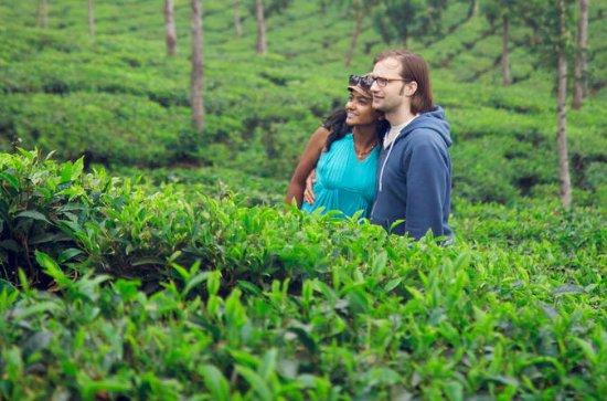 Bangladesh Discovery Tour Explore the Tea Gardens of Sreemangal