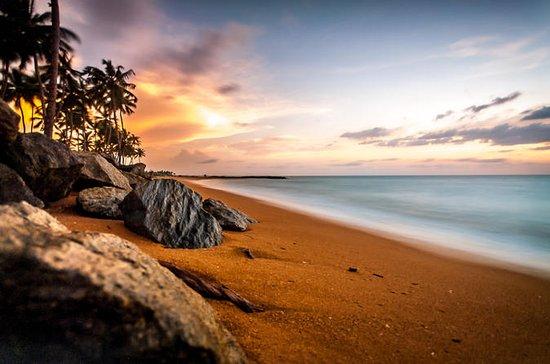 Tour in Sri Lanka for 8 days