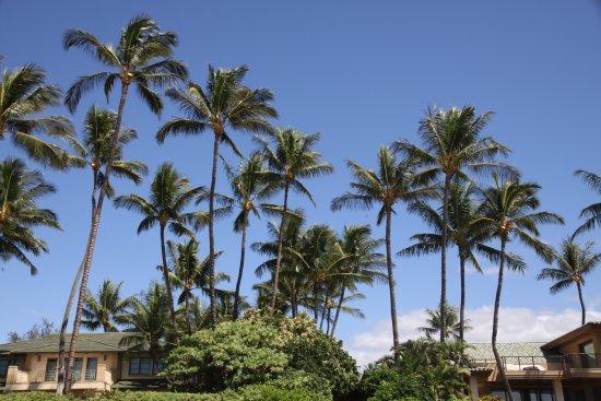 Keawakapu Beach: Haus am Strand