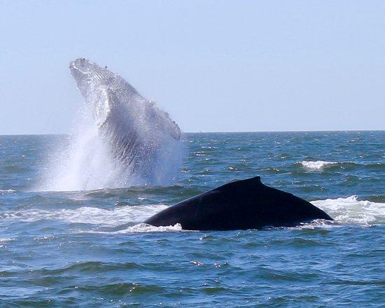 Avila Beach, Californië: Beautiful breach