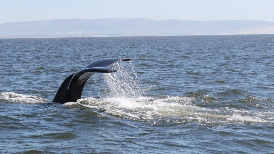 Central Coast Sailing and Avila Beach Whale Watching: Deep dive