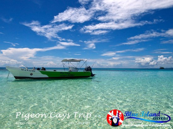 Sandy Bay, هندوراس: Manami resting in the clear waters