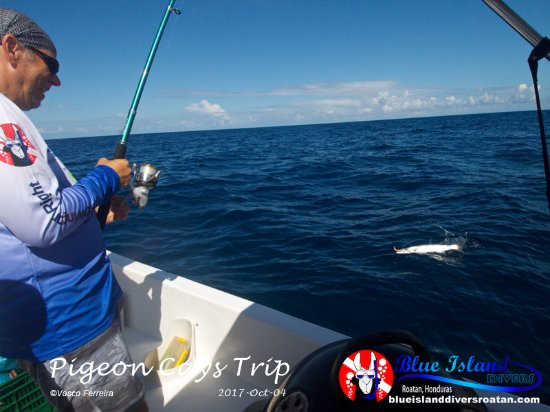 Sandy Bay, Honduras: our guest, Rob,  slaying some fish on the way to the dive site!