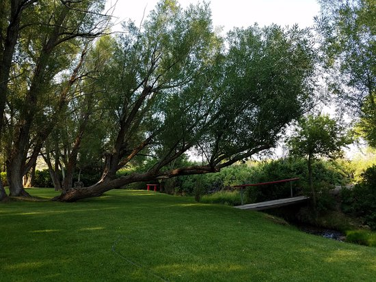 Wells, NV: Old growth willow trees by Trout Creek (a year-round stream)