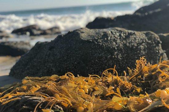 The Ritz-Carlton, Laguna Niguel: Salt Creek Beach tide pools