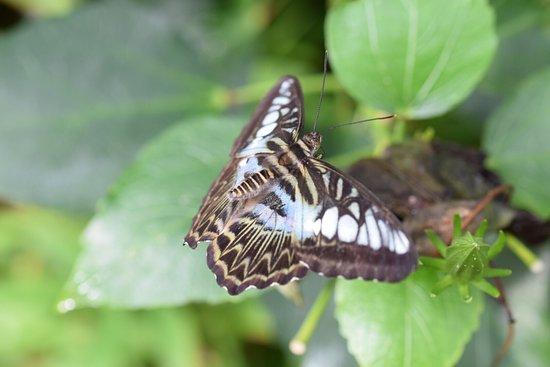 Stratford-upon-Avon Butterfly Farm : photo3.jpg