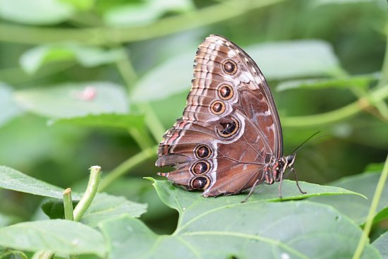 Stratford-upon-Avon Butterfly Farm : photo5.jpg
