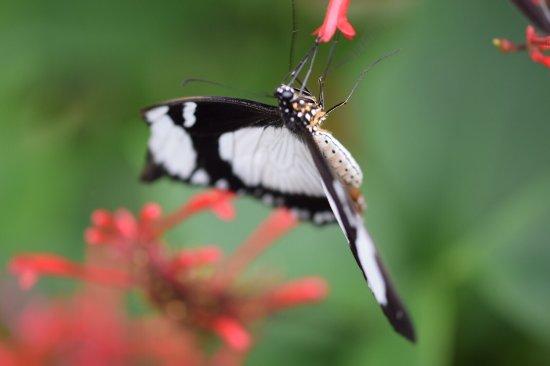Stratford-upon-Avon Butterfly Farm : photo6.jpg