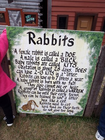 Hampshire, IL: Everything you wanted to know about rabbits