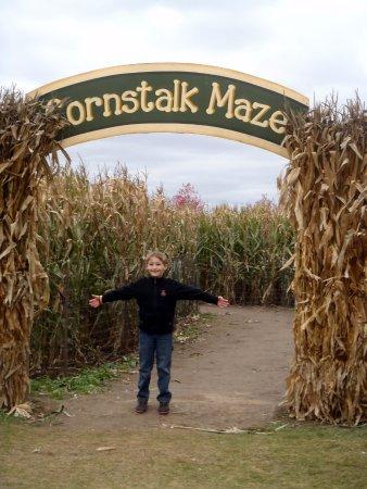Hampshire, إلينوي: cornstalk maze