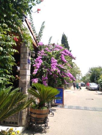 Budva Municipality照片