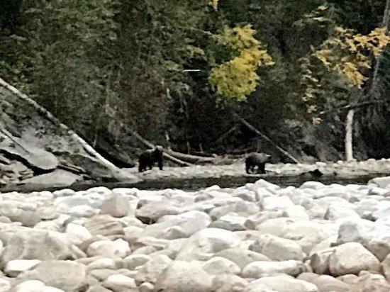 Kaslo, Canada: Grizzly Bears
