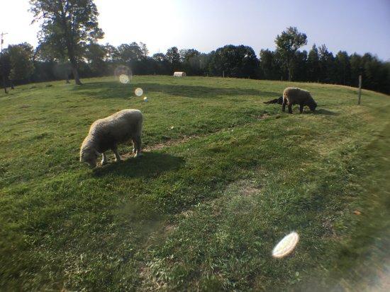 Wolfeboro, New Hampshire: Browns Ridge Family Farm