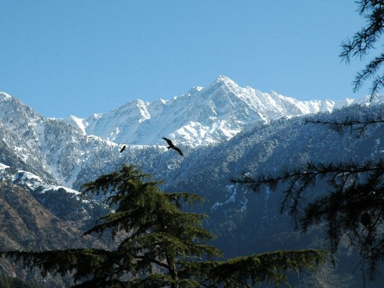 Kangra District, Indien: amazing view of mountains from the kareri hills
