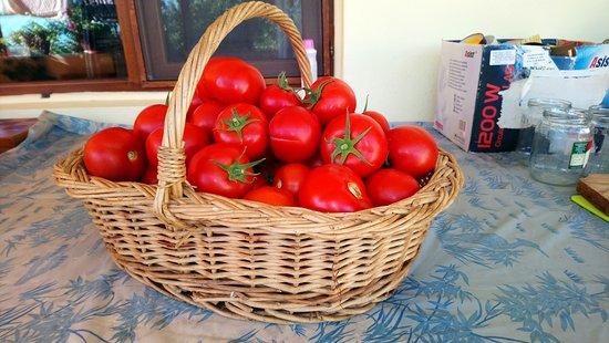 Massy, Frankrig: Les tomates du jardin de Pricop & Dorina